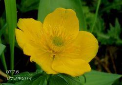 053shinanokinbai