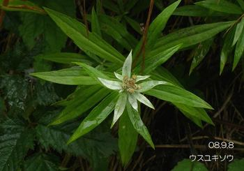 043usuyukisou