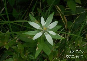 021usuyukisou2