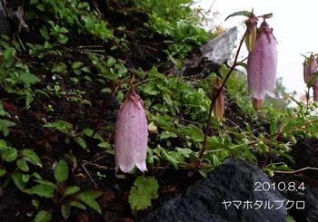 016yamahotarubukuro