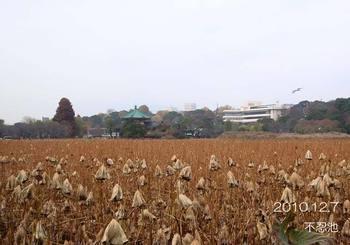 032shinobazunoike