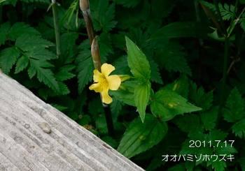 041oobamizohouzuki