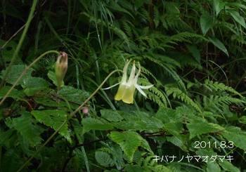 009kibananoyamaodamaki