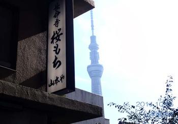 111025yamamotoyatoskytree