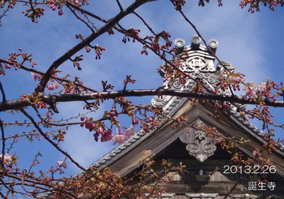 010sakura