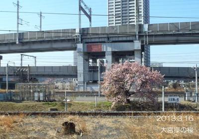 ぼーっと電車に乗っていると、目の隅に映るピンク色♪見えたらラッキー♪