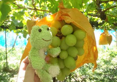 このブドウは瀬戸ジャイアンツ♪カエル♪と同じ色ですね♪保護色~♪