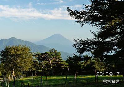 富士山に見守られて、牛さんも幸せですね♪