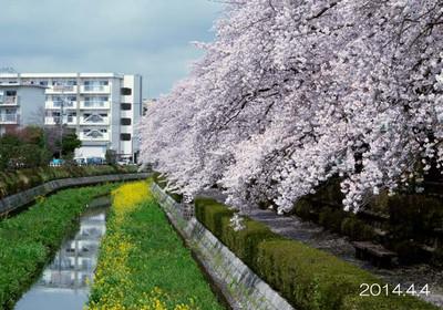 雨上りで、川の水量もやや多め♪サラサラ流れる春の小川には、程遠い川だけど。。。