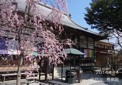 青空と桜の花♪日本の春ですね♪