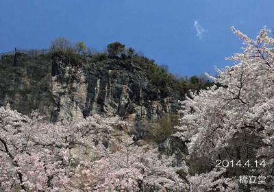 どこまでもきれいな空と、ピンクの桜♪この景色も今日の出会い♪