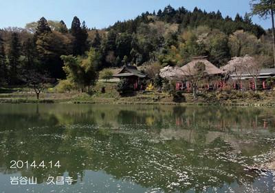 水面を進む花びらの列と、静かにたたずむ本堂を写した池は、まさしく天上の絵♪