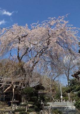 空に浮かぶように咲く可憐なしだれ桜です♪