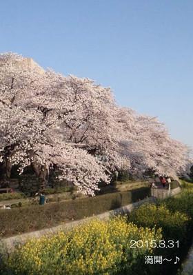 桜色って良い響き♪