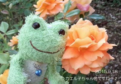 カエル子ちゃんの色の秋のバラ♪