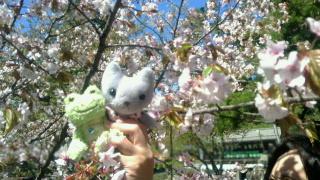 お花見ちぅ〜♪